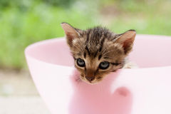 Cat kitten. Pretty cute cat and kitten Royalty Free Stock Image