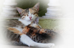 Cat and kitten Royalty Free Stock Images