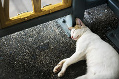 Cat Kitten Sleeping Footpath Roadside Animal-Concept royalty-vrije stock foto's