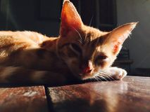 Cat. Kitten Sleepy Sunlight Shadow Royalty Free Stock Image