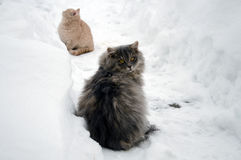 cat and kitten on snow Royalty Free Stock Photography