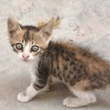Cat kitten in the street. Tripoli, Lybia - May 02, 2002: Cat kitten in the street of tripoli Royalty Free Stock Image