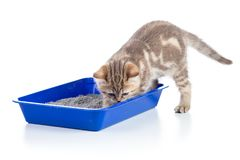Cat kitten in toilet tray litterbox isolated. Cat kitten in toilet tray box with litter isolated on white stock image