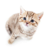 Cat kitten Stock Photography