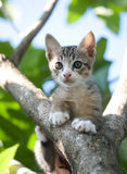 Cat kitten on tree Royalty Free Stock Photos