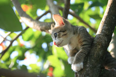 Cat kitten on tree Stock Images