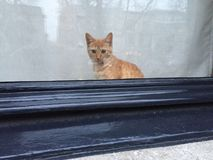 Cat Kitten waiting window Stock Photography