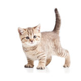 Cat kitten on white background Stock Photos