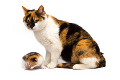 Cat with a kitten Stock Image