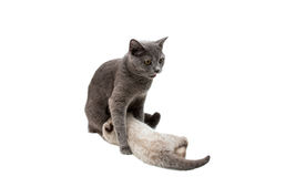 Cat with a kitten Stock Photos