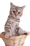Cat kitten white little nice pet Royalty Free Stock Image