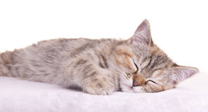 Cat kitten white little nice pet Stock Photos