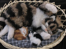 Cat with kittens Stock Images