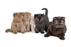 Cat And Kittens. Cat and four little kittens on white background stock photos