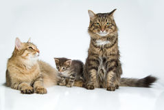 Cat And Kittens. Cat and little kitten on white background stock photos