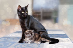 Cat with kittens. Stock Photos