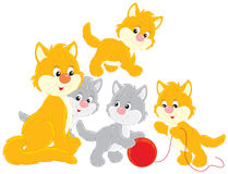 Cat and kittens. Ginger and gray kittens with their mommy cat Royalty Free Stock Images