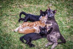 Cat family lying on the lawn