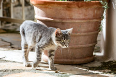 Cat and kittens in Italy and Greece, Mediterranean cats, cute animals and pets. Stock Photography