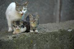 Cat with kittens on the street Royalty Free Stock Images
