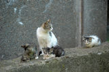 Cat with kittens on the street Royalty Free Stock Photo