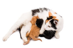Cat with kittens Stock Photo