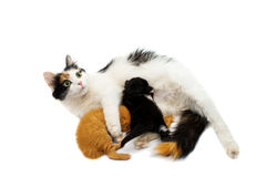 Cat with kittens Royalty Free Stock Photo