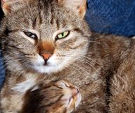 Cat and kitty Royalty Free Stock Photos