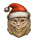 Cat, kitty in a Christmas hat. Sketch vintage vector illustration royalty free illustration