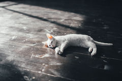Cat kitty little soft white background inside Stock Photography