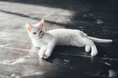 Cat kitty little soft white background inside Stock Photo