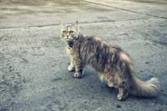 Cat kitty pet. Photography of nature cat kitty pet Royalty Free Stock Photo