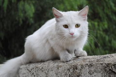 Cat kitty. A white beautiful cat looks at me outside spring day pity kitty cat food hungry Stock Photos
