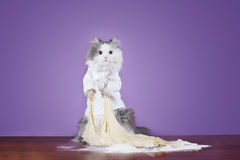 Cat kneads dough in a suit chef Royalty Free Stock Image