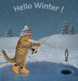 Cat caught a fish in winter 2. The cat in a knitted hat and boots catches fish on ice of a frozen lake in the forest. Hello winter stock photos