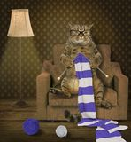 Cat knitter 1 royalty free stock photos