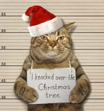 Bad cat and Christmas tree. The cat knocked over the Christmas tree. It was arrested for this royalty free stock image
