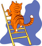 Cat on a ladder Royalty Free Stock Photography