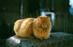 Cat in Ladoga. Cat sitting at stone in village Royalty Free Stock Images