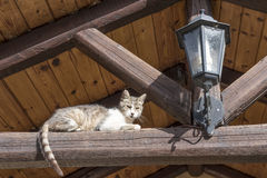 Cat and lantern. Cat basks in the morning sun under the roof of a small mountain hotel Stock Images