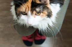 Cat in the lap Stock Photo