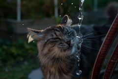 Cat Lapping Running Water dans le jardin image stock