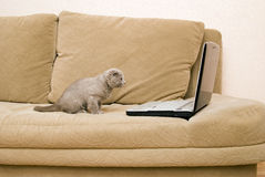 Cat and laptop Royalty Free Stock Photography