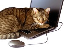 A cat with a laptop Stock Photo