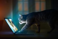 A cat with laptop Stock Photo