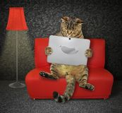 Cat with a laptop on the red couch royalty free stock photos