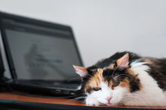 Cat and laptop Royalty Free Stock Images