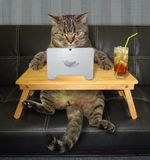 Cat with laptop on sofa stock photography