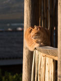 Cat in the last of the days sun Stock Photography
