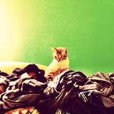 Cat laundry Royalty Free Stock Images